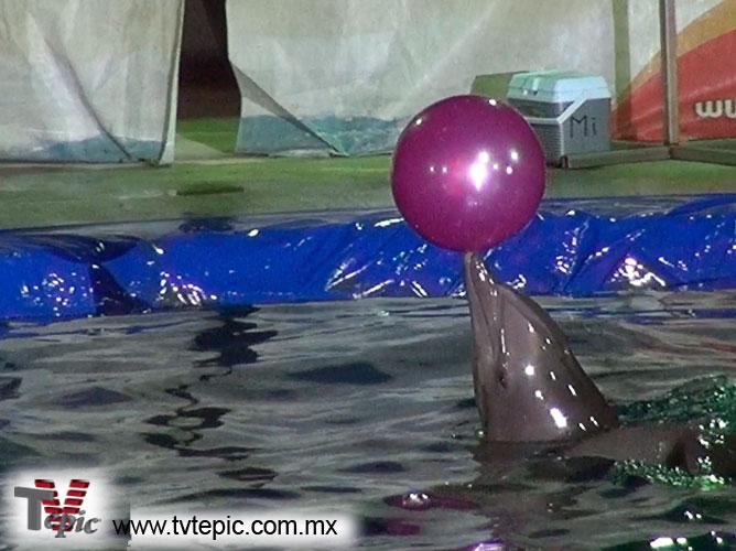 16-Delfines