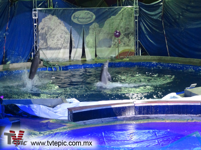 15 Delfines